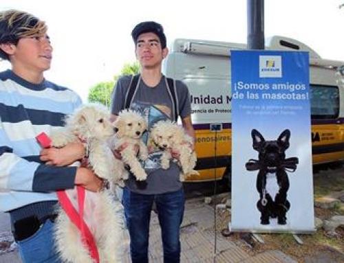 En Villa Lugano se realizó el Edesur Pet Friendly