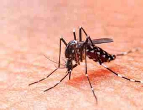 Lugano es el segundo barrio con más casos de dengue en la Ciudad